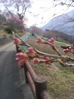 2014-03-17-16-01-26_photo_R.jpg
