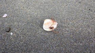 貝殻①_R.JPG